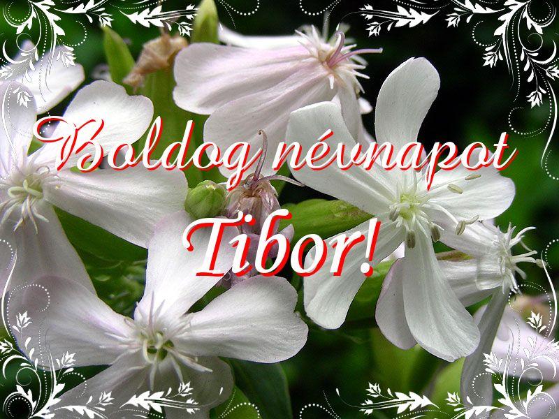 tibor névnapi képek Mikor van Tibor névnap?   A név jelentése eredete és becézése. tibor névnapi képek