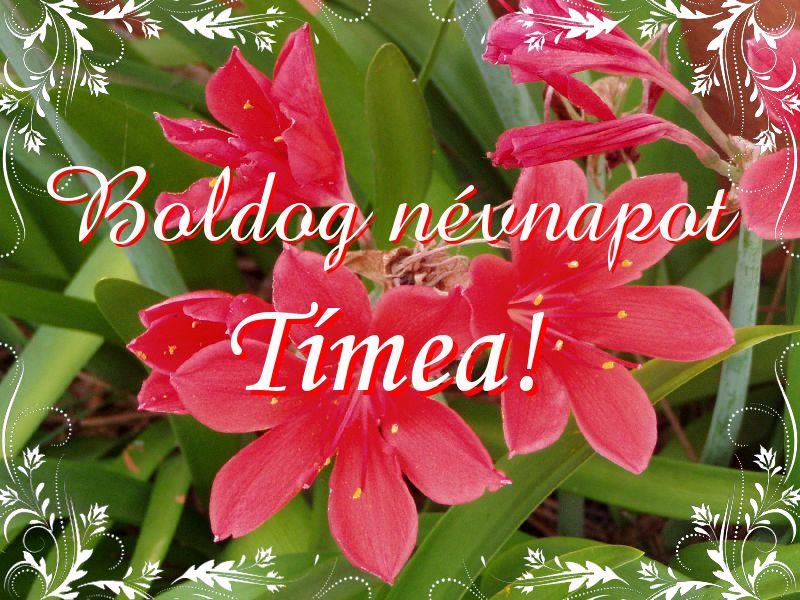 tímea névnap képek Mikor van Tímea névnap?   A név jelentése eredete és becézése. tímea névnap képek